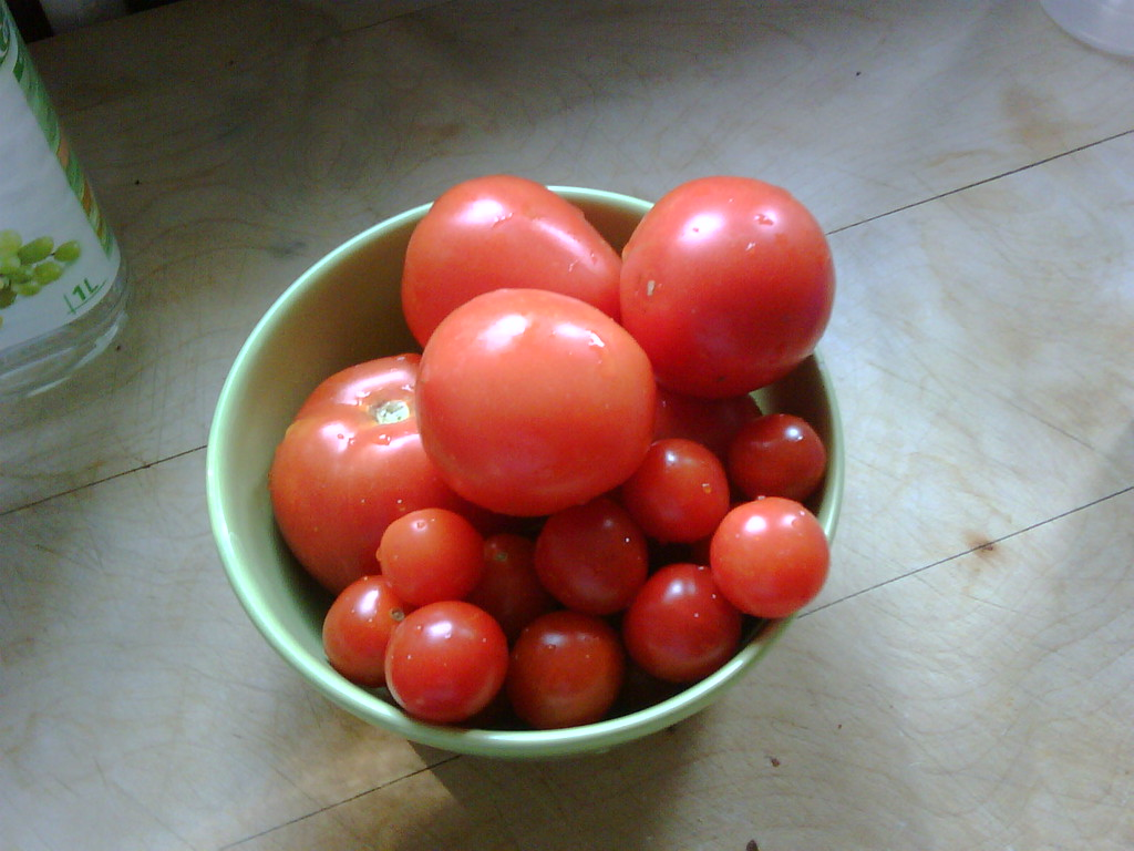 More tomatoes from our garden!