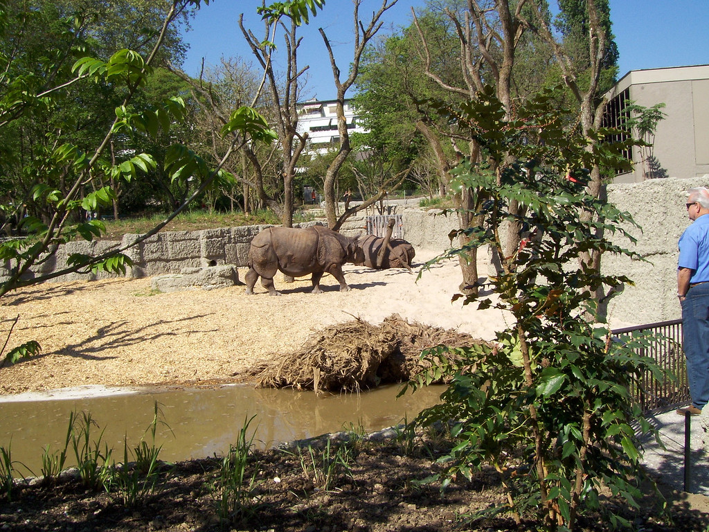 Basel zoo just opened a new rhino enclosure