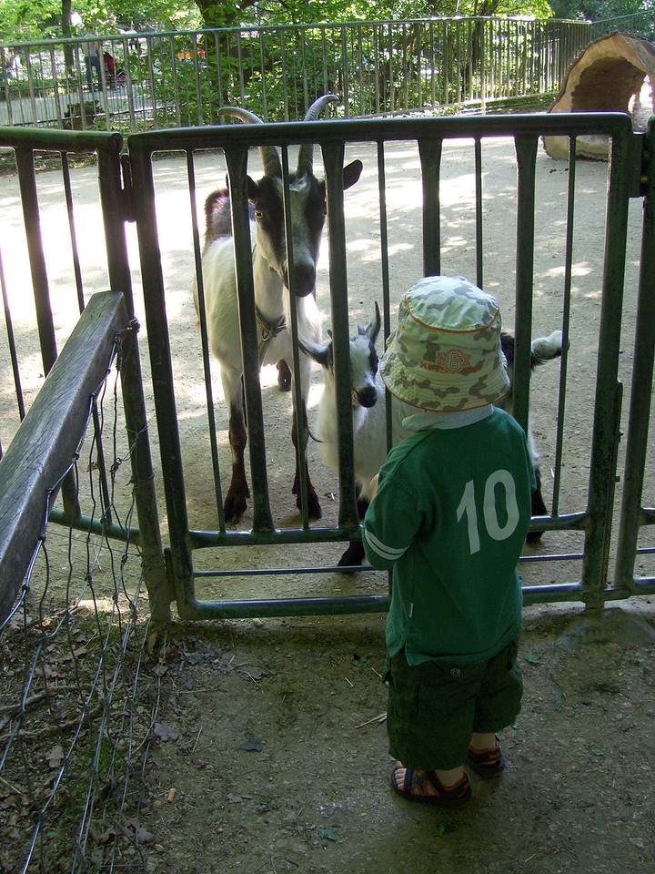 Jack got pretty freaked out when the big goat started making a lot of noise. Crocodiles; loves them - goats; scary!
