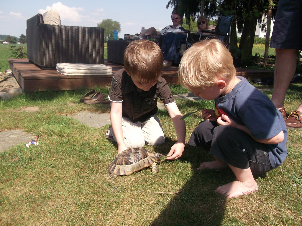 009 Jack Feeding the Tortoise
