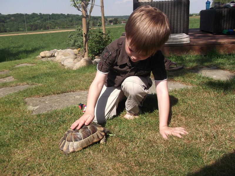 008 Jack Petting the Tortoise