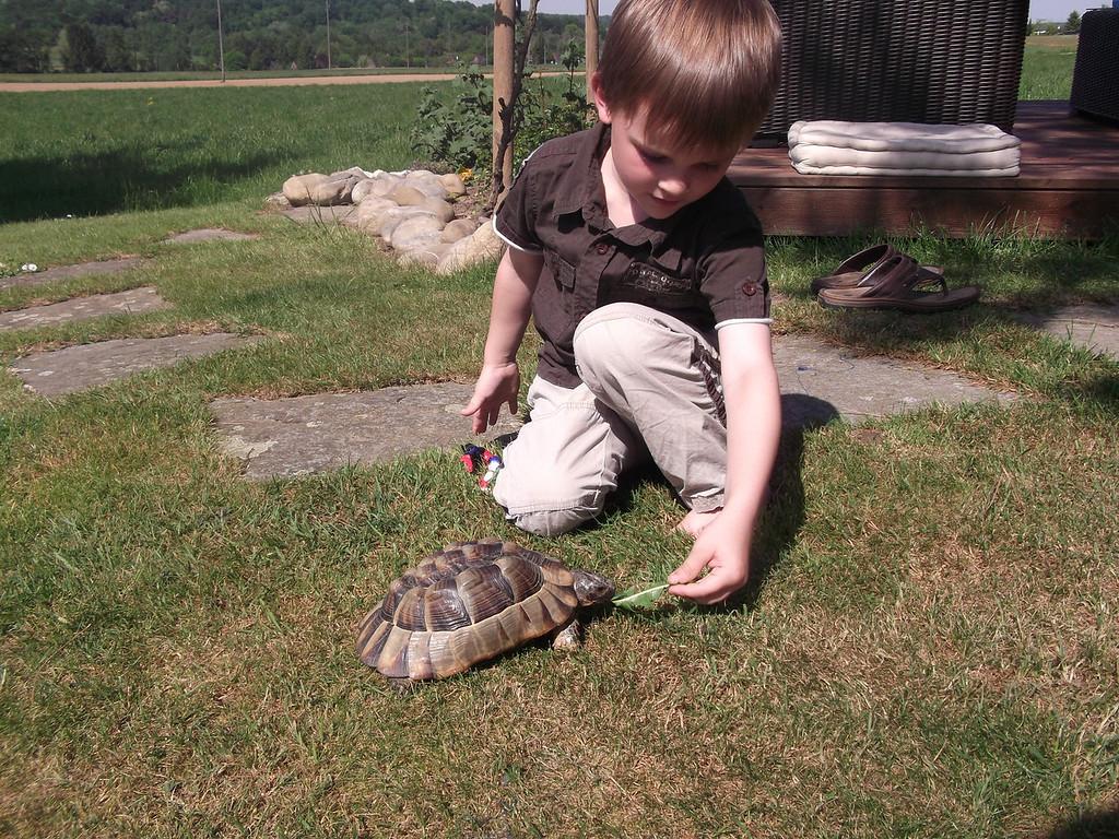 007 Jack Feeding the Tortoise