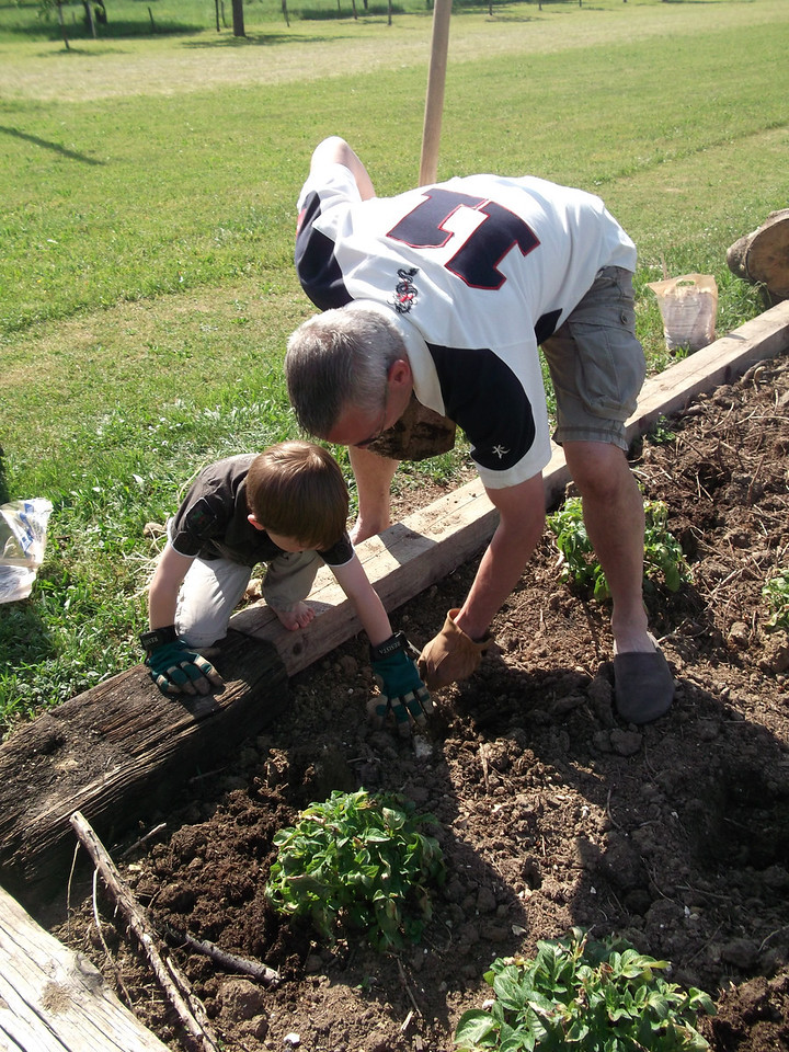 016 Planting Potatoes
