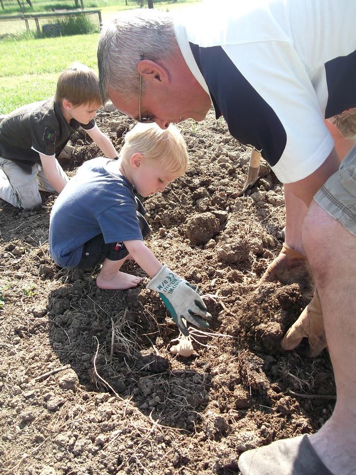 018 Planting Potatoes