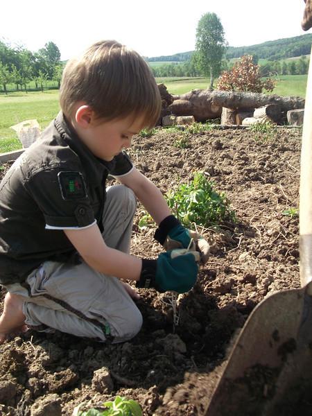 017 Planting Potatoes