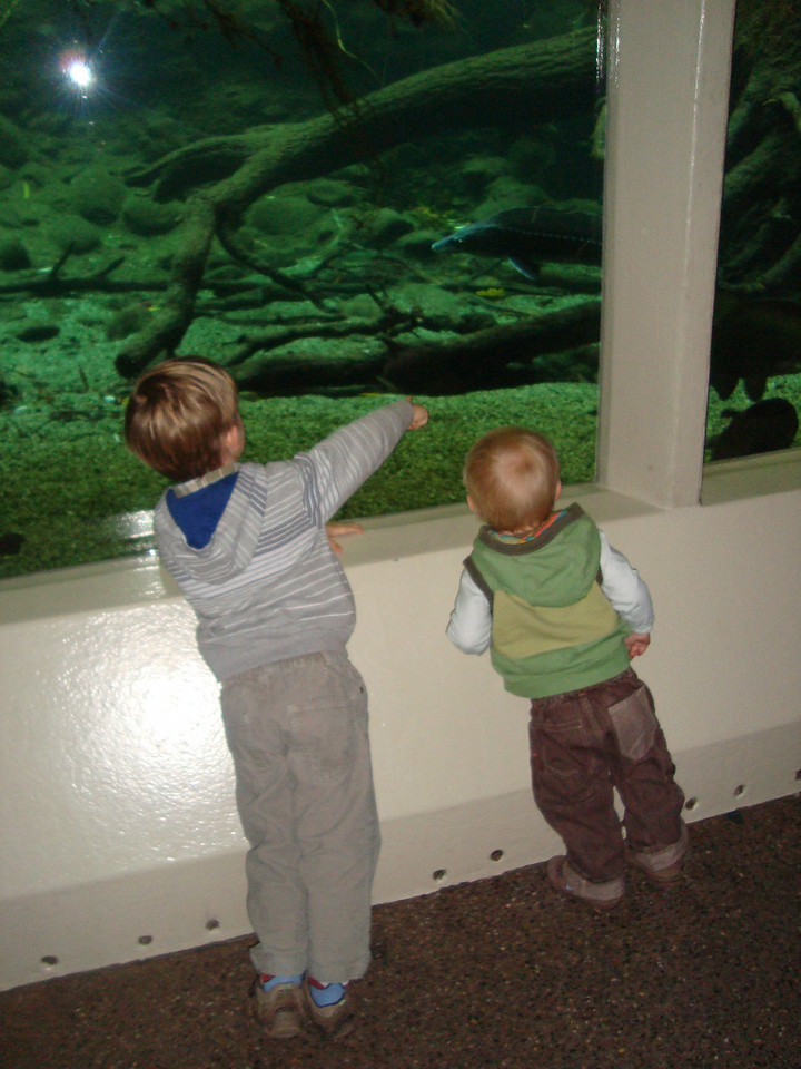 Checking-out the fishies at the zoo