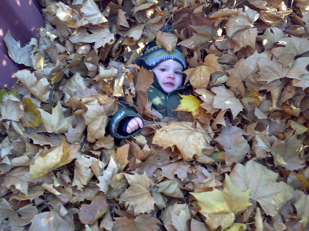 Playing in the leaves at the rugby club - I love this photo!