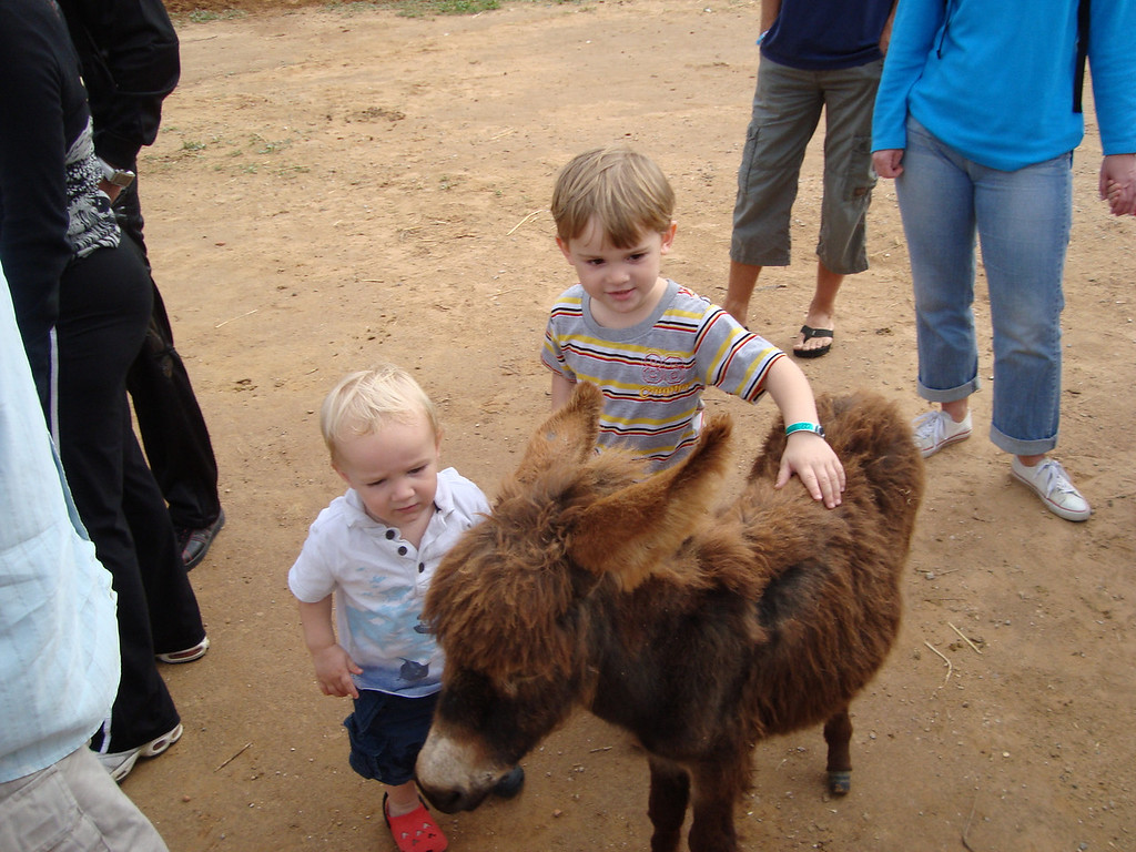 The boys both really loved this sweet, baby donkey
