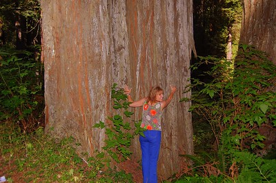 Does this ancient redwood tree make my butt look big?