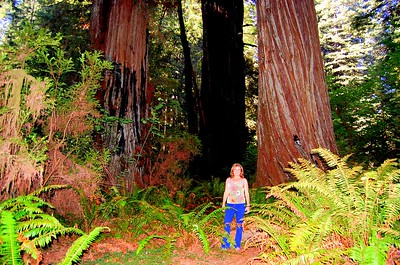What a magical place the Redwood Forest is!