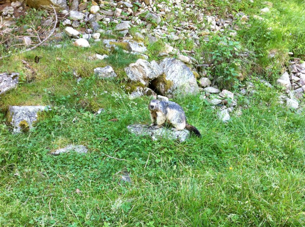 035 Marmot