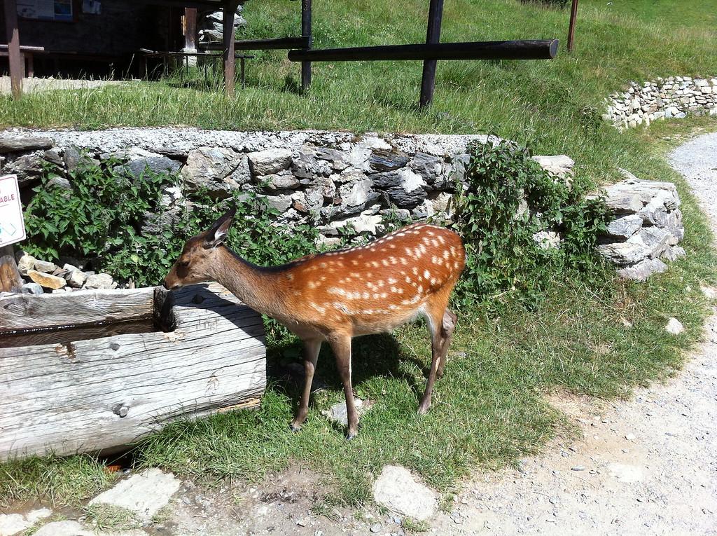 029 Deer