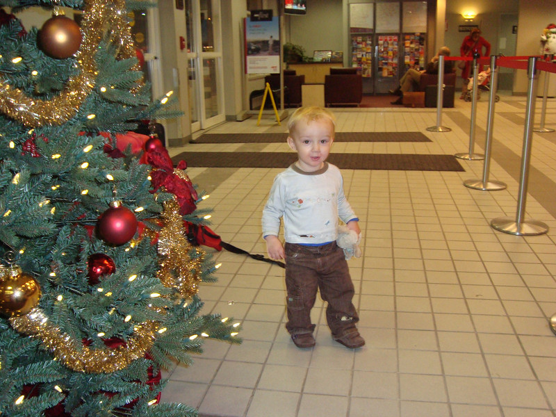 Danny however was full of beans (as usual). He loved the Christmas Tree in Avis.