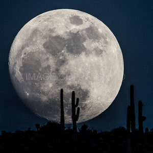 Full Moon Set with Saguaro