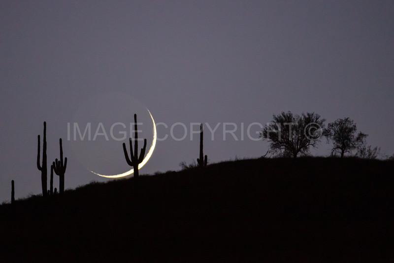Crescent Moon over Desert Saguaro