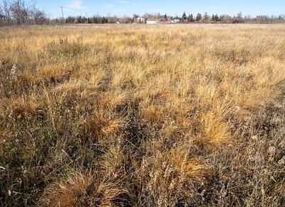 My autumn Prairie