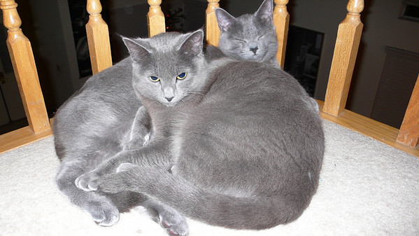 Vladimir and Sasha