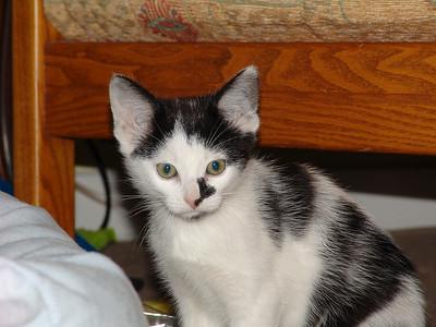 071118_Cats_0033