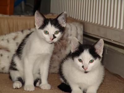 071118_Cats_0029