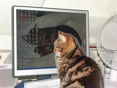 061219_Cats_0006