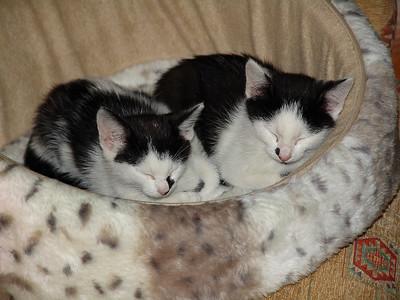 071117_Cats_0008