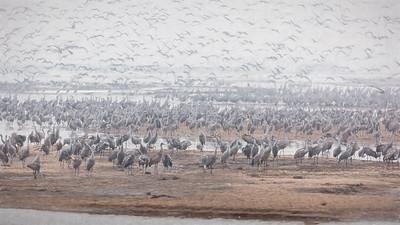 Nebraska; crane