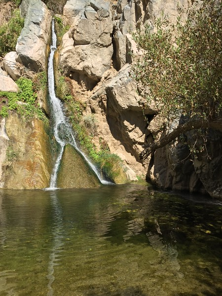 Darwin Falls - a continuously running fresh spring in Death Valley