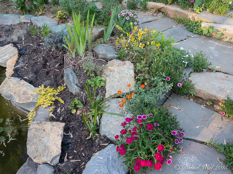 """Rockwork by small pool, iris, """"annual"""" dianthus, geum, creeping Jenny, other"""
