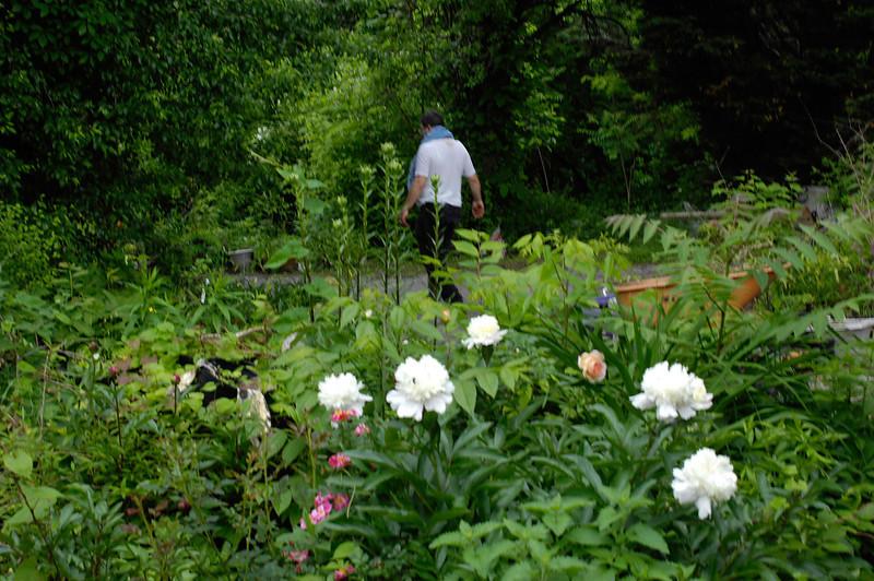 Peony, rose, weeds, Madonna lily stems
