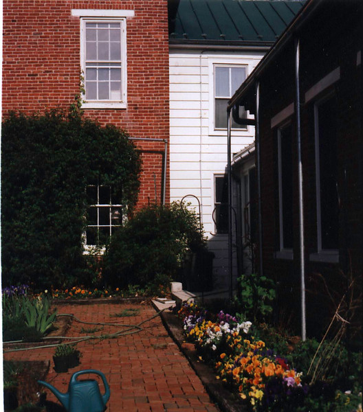 Pansies in courtyard, first year (built 1999, this is spring 2000)