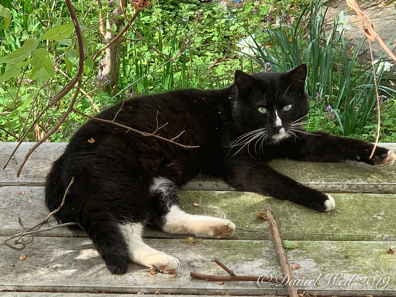 Skunklet, Supervisor of Horticulture, Wintersweet House.  Specialty, rolling on plants. 4/19/19