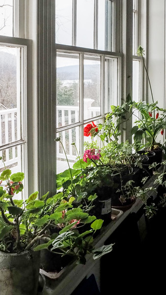 Dan's studio window.  Sunny windows where the cats don't go...are precious.