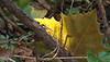 Art shot.  Sun through a fallen sycamore leaf.