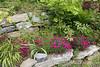 "Peonia obovata seedlings ex Aaron F.; ""annual"" dianthus"