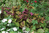 Coleus, begonias, impatiens, weeds, N of guest room