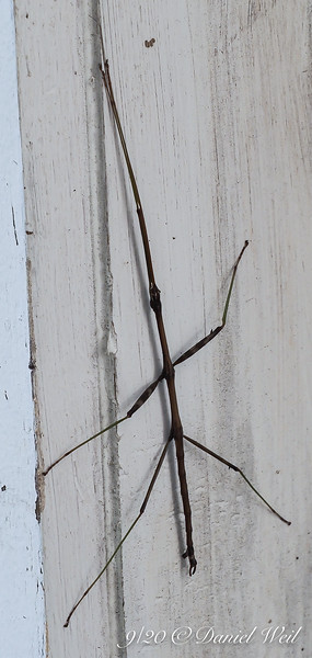 Walking stick, at Dan's studio door.  This is what's known as keeping your walking stick by the door...