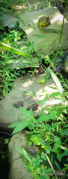 Five frogs.  #5 is 90% hidden.