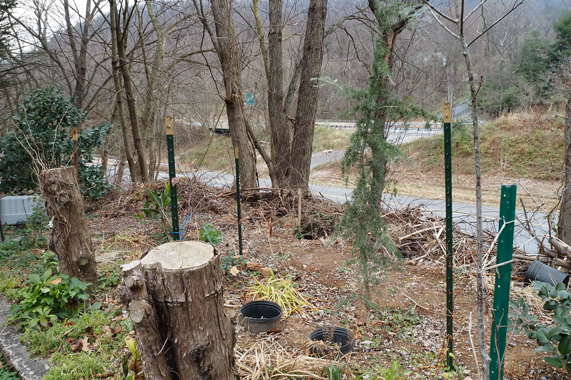 Highway bed.  Stumps are to grow vines on.  Line of evergreen (deodar, hollies), then dumped brush down highway bank, then trash maples the state let grow.  Then Rte 340 E, and in background 340 W and South Mountain.