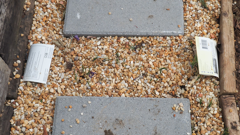 Gravel walk.  Daffodils to left, small bulbs (species tulips & crocus) to R, under gravel.