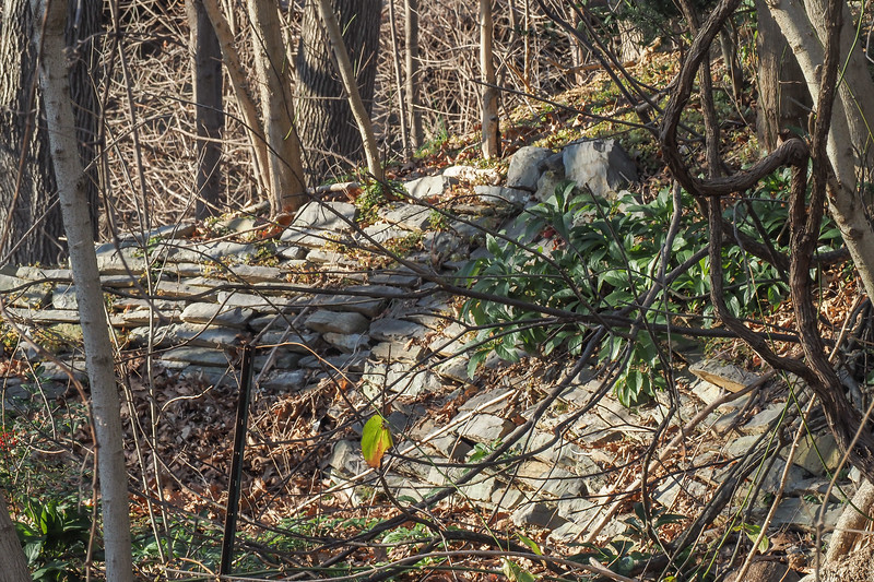 View of wall of neglected-for-years amphitheatre-in-making