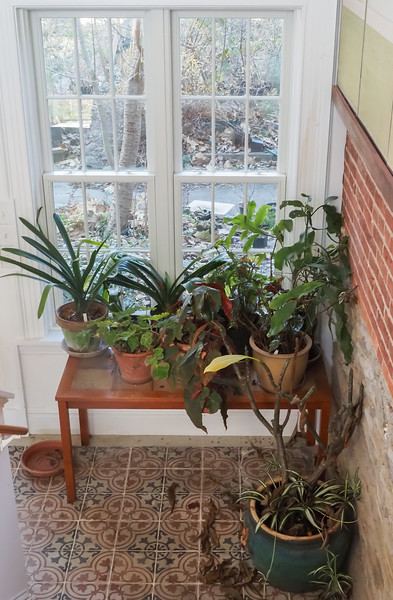 Begonias and Clivias, etc, library link N landing