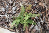 Tiny fern, forget what.  W of Dan's studio