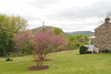 View from neighbor's house; redbud