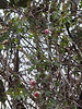 12/26/20 Roses sad but still in bloom, up Southern magnolia.