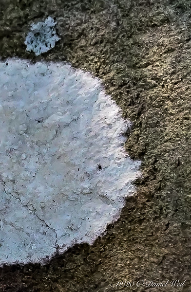 Lichen on rock in front of studio.