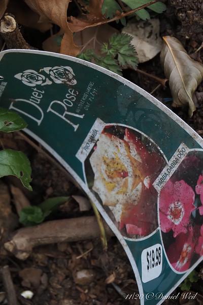 Tag on rosebush, next picture