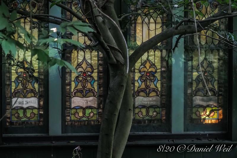 Magnolia on E of greenhouse