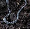 "Teensy bably snake/  Beautiful pattern.   Perhaps 8"" long."