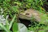 Big frog.  Small pond.  Dan says, small frog, big pond.  All relative.