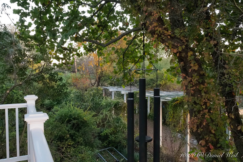 View of big arbor from porch balcony.